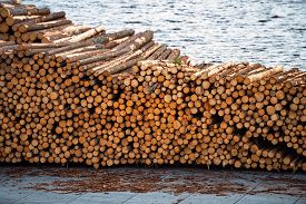 Stacks Of Wooden Logs At Docks Ready To Be Shipped