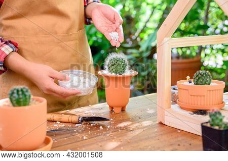 Planting Cactus And Growing Tree. Home Gardening And Recreation Activity At Botanic Garden.