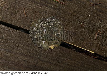 Drops Of Water On An Autumn Fallen Leaf Lying On The Porch