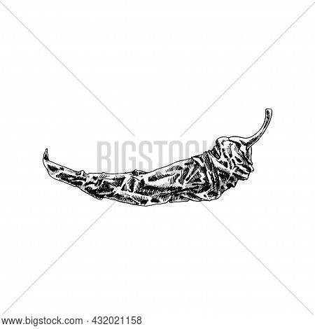Whole Dry Pepper Chilli. Vintage Hatching Vector Black Illustration. Isolated On White Background. H