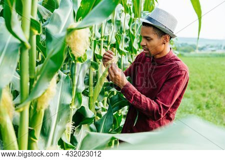 Agronomist In The Corn Field And Examining Crops. Agribusiness Concept. Brazilian Farm. Front View O