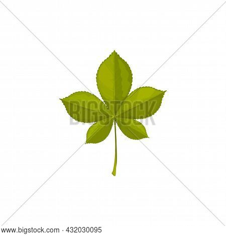 Chestnut Leaf, Autumn And Fall Tree Leaves Icon, Vector Isolated Foliage. Chestnut Tree Green Leaf,