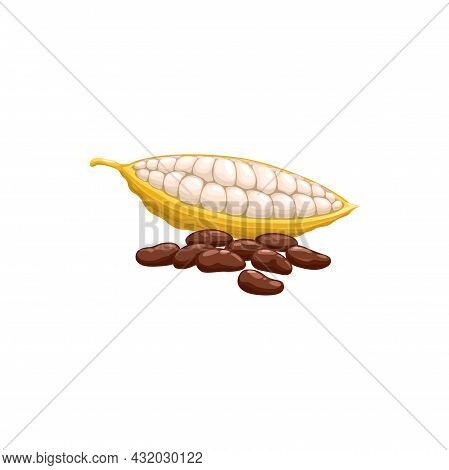 Chocolate Cocoa Beans Isolated Superfood. Vector Black Coffee Beans, Healthy Organic Food Products.
