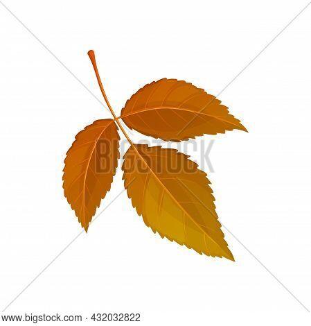 Autumn Elm Leaf Vector Icon, Cartoon Foliage, Fallen Ulmus Tree Leaf Of Brown Color, Design Element