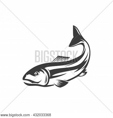 Trout, Char, Grayling And Whitefish Fishery Sport Trophy Isolated Monochrome Icon. Vector Fish Under