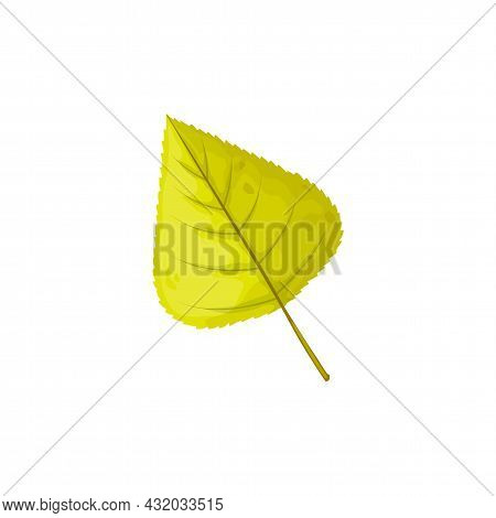 Autumn Leaf, Tree Foliage Fall, Green Leaves, Vector Isolated Icon. Birch Or Poplar And Linden Tree
