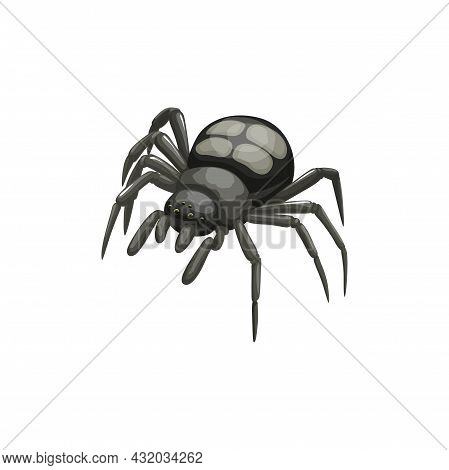Spider Icon, Pest Control Insects Extermination And Disinsection Service, Vector. Spider Insect, Dom