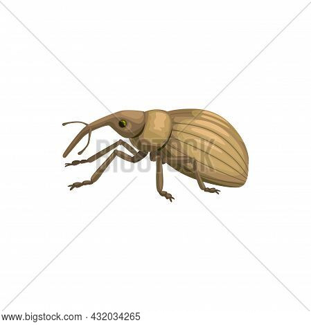 Weevil Snout Beetle Icon, Insect Pest Control Disinsection And Extermination, Vector. Weevil Or Snou