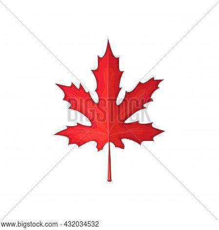 Autumn Maple Leaf Vector Icon, Cartoon Foliage, Fallen Tree Leaf Of Red Color, Tatar Maple Leaf Natu
