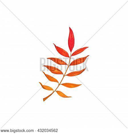 Autumn Rowan Leaf Vector Icon, Cartoon Fallen Foliage, Red Tree Leaf, Natural Design Element, Isolat