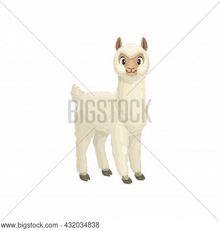 Alpaca, Vicugna Pacos Linnaeus Llama Animal Portrait With Furry White Body Isolated Cartoon Baaby An