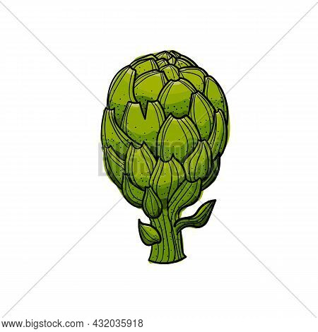 Vector Illustration Of A Green, Fresh, Vibrant Artichoke.