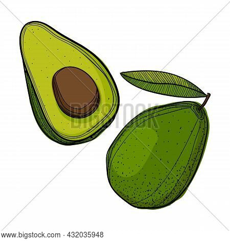 Vector Illustration Of A Half Avocado And A Whole Avocado Using Different Shades Of Green, Brown And