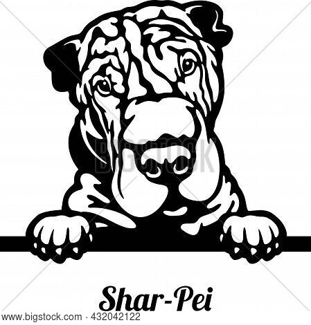 Shar-pei Peeking Dog - Head Isolated On White