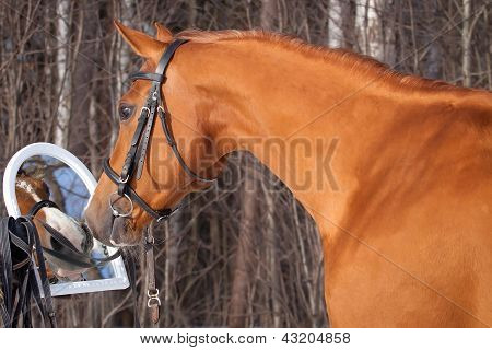 Horse Sees Herself In The Mirror