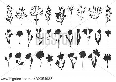 Silhouettes Floral Elements. Monochrome Glyph Foliage Natural Leaves Herbs. Set Flower Botanical Vec
