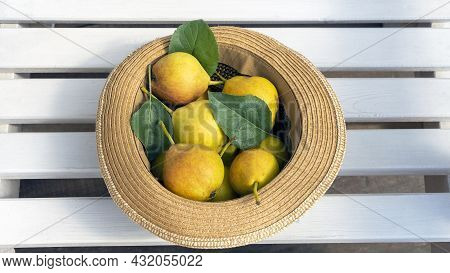 Romantic Rustic Still Life With Hats And Ripe Organic Pears. Autumn - Summer Gardening Composition.
