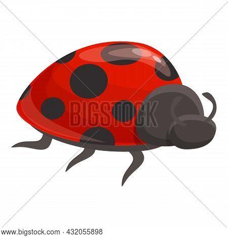 Beetle Bug Icon Cartoon Vector. Ladybug Insect. Spring Ladybird