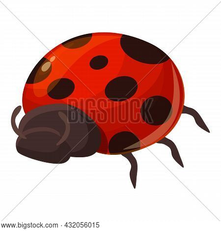 Spotted Beetle Icon Cartoon Vector. Ladybug Insect. Ladybird Plant