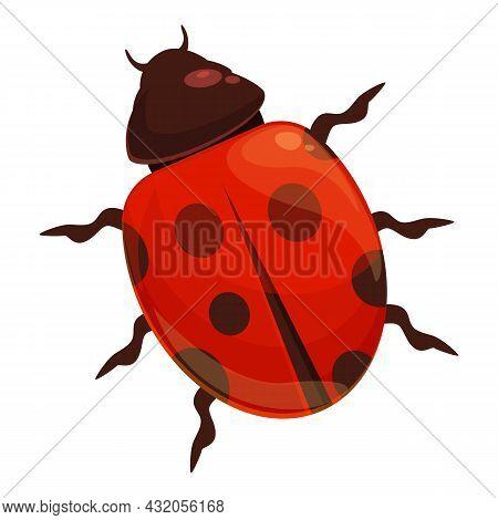 Wild Ladybug Icon Cartoon Vector. Bug Ladybird. Beetle Insect