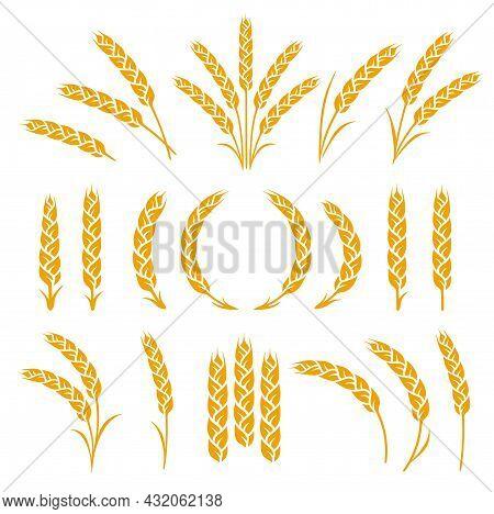 Set Of Wheat, Rye, Barrley Spikelets And Ears