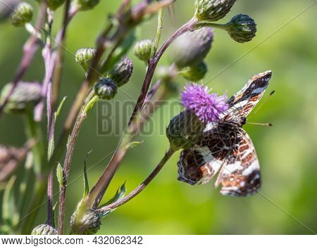 Butterfly On A Background Of Green Grass In The Summer Day