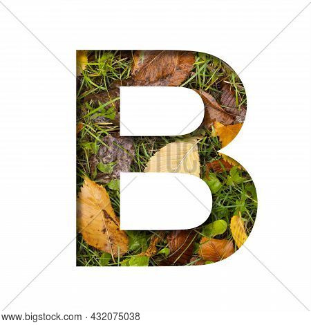 Early Autumn Font.the Letter B Cut Out Of Paper On A Background Of Green Grass With Yellow Autumn Le