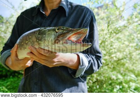 Woman With Big Beautiful Pike In Hands. Success Pike Fishing. Close Up.