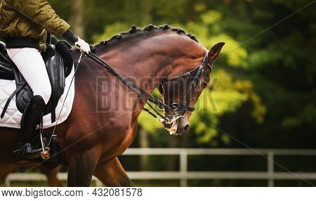 A Beautiful Bay Horse With A Braided Mane And A Rider In A Green Jacket In The Saddle, Gallops Aroun