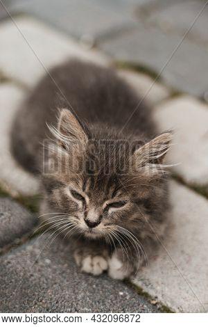 Cute Little Grey Kitten With Green Eyes Relaxing On Floor, Outdoors, Closeup