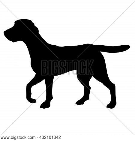 Vector Hand Drawn Beagle Dog Silhouette Isolated On White Background