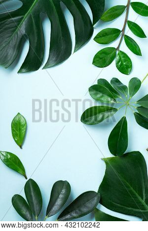 Tropical Leaves Monstera On Pink Background. Leaf Of Green Monstera Plant On Blue Background With Co