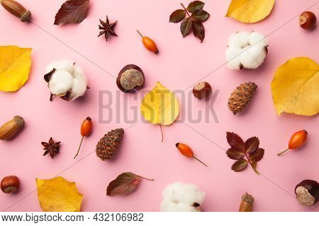 Autumn Composition. Dried Leaves, Flowers, Berries On Pink Background. Thanksgiving Day Concept.