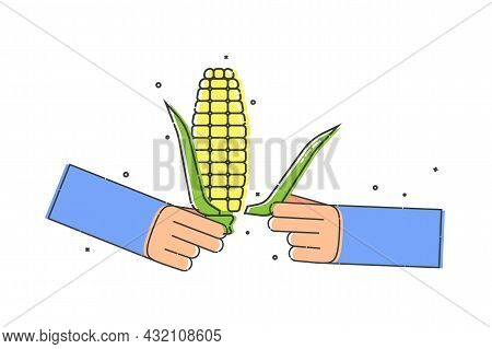 Yellow Corn Cob In Human Hand. He Tears Off A Leaf Of The Plant With His Fingers. Organic Vegetable