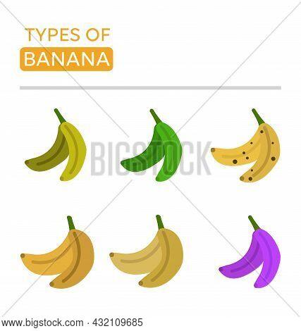 Types Of Bananas. Icons Of The Most Popular Bananas. Banana Icons Set