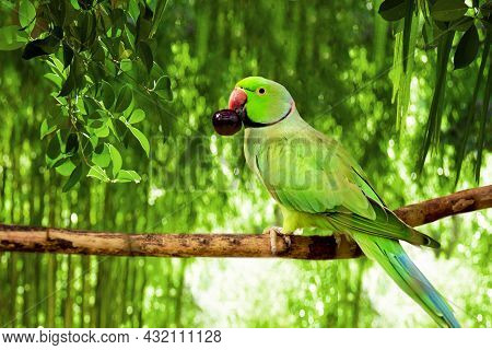 Green Amazonian Parrot With A Berry In Its Beak Sits On A Branch In The Forest