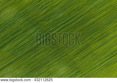 Aerial photography of green field. Green grass texture background top view drone shot. Agricultural area of Ukraine, Europe. Concept of agrarian industry. Vibrant photo wallpaper. Beauty of earth.