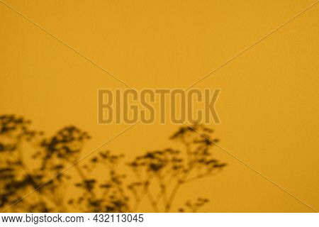 Trending Concept In Natural Materials With Plant Shadow On Orange. Presentation Presentation With Da