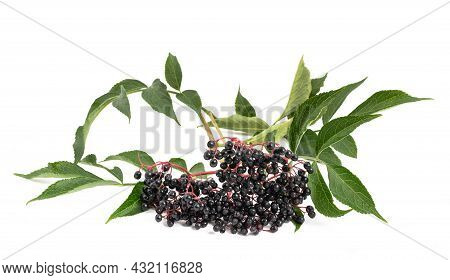 Elderberry Branch With Berries   Isolated On White Background