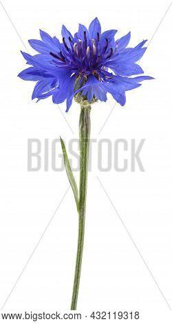 Blue Cornflower (cyanus Segetum) Isolated On White Background