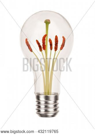 Classic incandescent light bulb with pollen tube and stamen anthers isolated on white background. Energy concept flower bioluminescence idea photo
