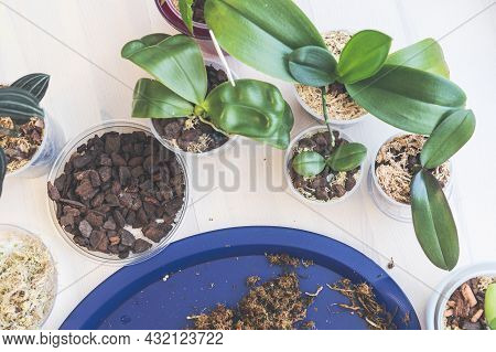 Orchid Transplanting, Woman Transplanting Houseplants, Houseplants Are Easy To Care For, Beautiful O