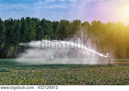Automatic Irrigation Of An Agricultural Field At Summer