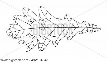 Linear Graphic Oak Leaf Picture With Veins Isolated On White Background. Vector Illustration. Elemen