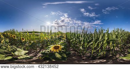 360 Seamless Hdri Panorama View In Field With Corn And Sunflowers In Sunny Day In Equirectangular Sp