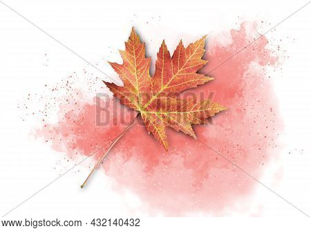 Colorful Isolated Fall Acer Leaf On A Red Watercolor Background