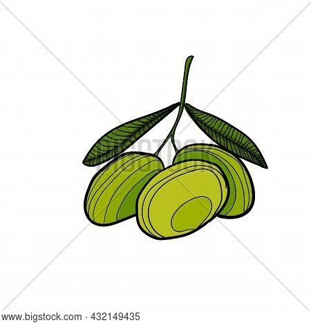 Vector Illustration Of Olives Using Shades Of Green And Strokes.