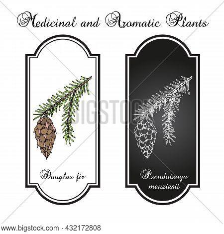 Douglas-fir Pseudotsuga Menziesii , State Tree Of Oregon. Hand Drawn Botanical Vector Illustration
