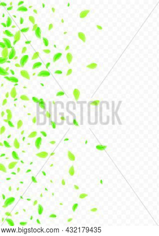 Light Green Leaf Background Transparent Vector. Leaves Process Design. Rustic Texture. Green Realist