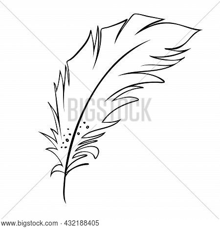 Feather Of Birds. Black And White Feather Silhouette For Logo Vector Set